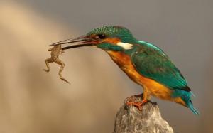 7  Diet of Birds of Prey - Kidwings