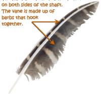 Vane Feather